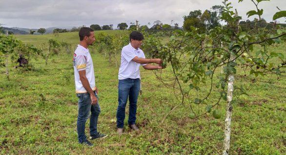 Produtores investem em diversificação de fruticultura