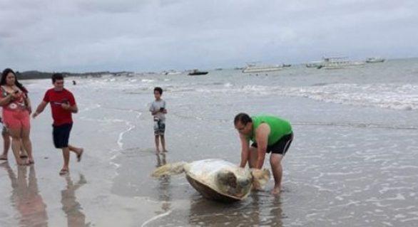 Tartaruga é encontrada em praia de Maragogi