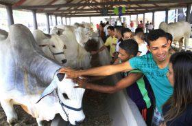 Parque da Pecuária começa a receber animais da Expoagro 2019