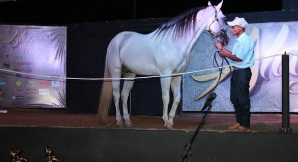Seleção Alagoas Quarter Horse será apresentada nesta quarta (9)