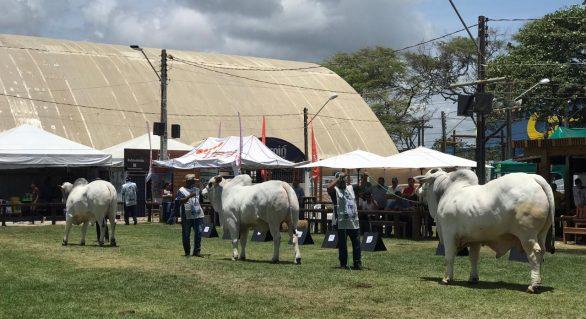 Expoagro 2019 faz pista de julgamento de alto nível