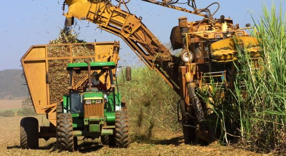 Safra já tem mais de 393 mil toneladas de açúcar produzidas