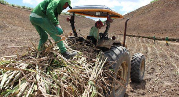 Mais de 5 milhões de toneladas de cana já foram beneficiadas na safra 19/20