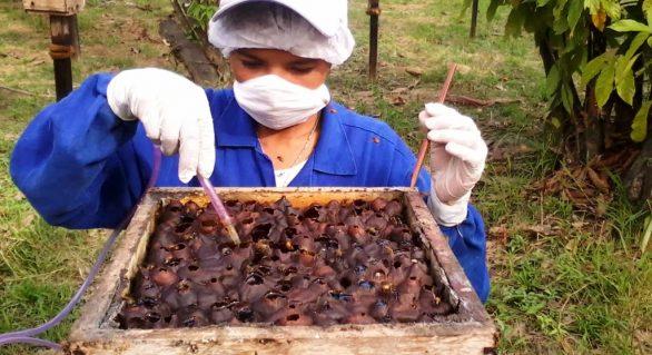 Marechal Deodoro recebe XIX Seminário Alagoano de Apicultura e VI de Meliponicultura