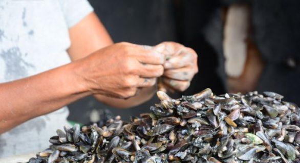 Vendedores denunciam altas taxas cobradas pelo Centro Pesqueiro