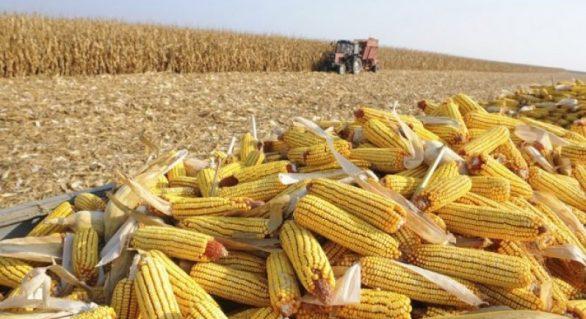 Seminário discute fortalecimento da cultura de grãos em AL