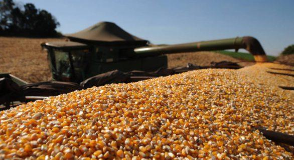 Preço do milho se mantém estável para safra 2019/2020
