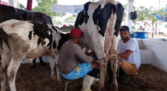 CPLA: torneios leiteiros estimulam o fortalecimento da agricultura familiar