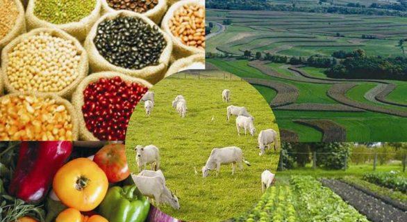 Valor Bruto da Produção Agropecuária de 2019 alcançou R$ 630,9 bi