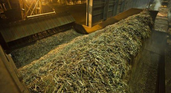 Safra acumula 12,9 milhões de toneladas de cana processadas