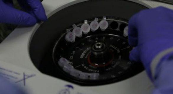 Coronavírus: Número de suspeitos infectados cai para três