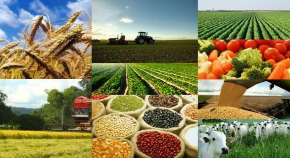 PIB do agronegócio cresceu 2,4% em 2019