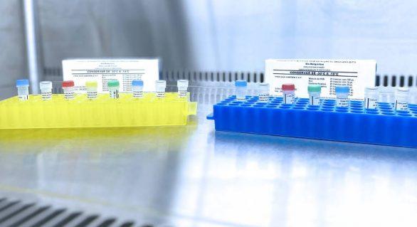 Estudos apontam bons resultados na inibição do novo coronavírus