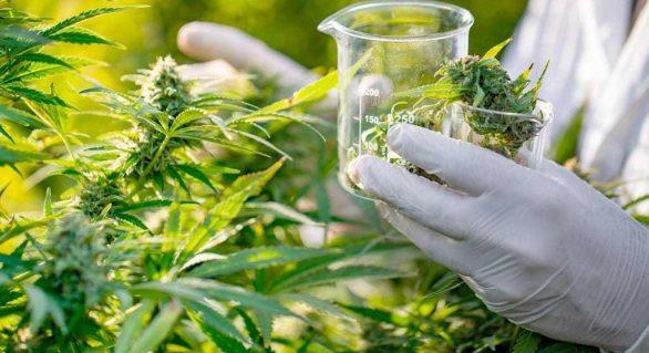 Entra em vigor norma que autoriza fabricação e venda de derivados da cannabis