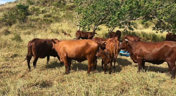 Fazenda Mangabeira promove terceiro Leilão 3 Histórias