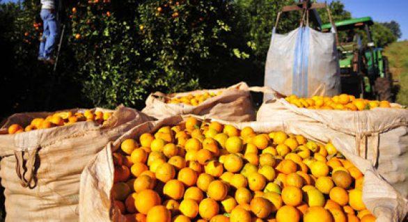 Confira como anda a produção rural diante da crise do coronavírus