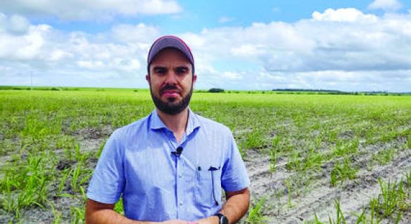 Covid: Asplana defende subvenção da cana para minimizar prejuízos