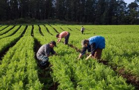 Questão ambiental será principal entrave para produtores rurais