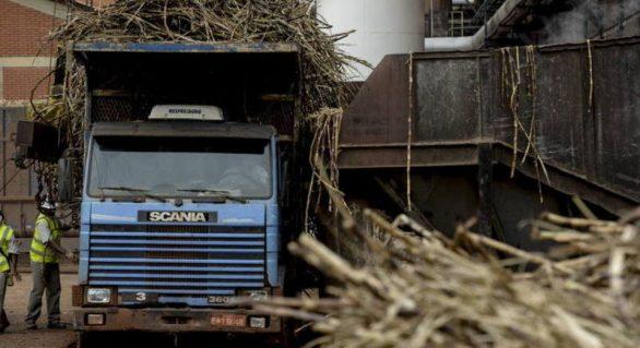 Safra 19/20 segue com 16,8 mi de toneladas de cana processadas