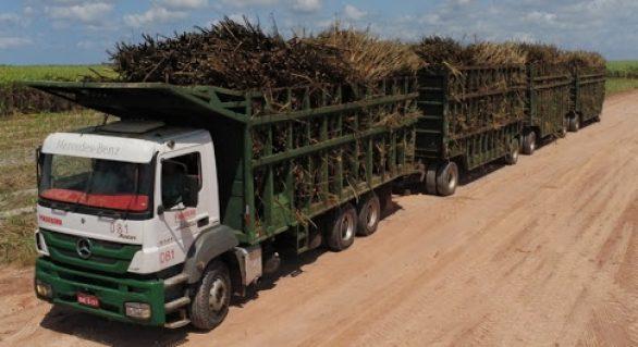 Pindorama abre a safra 20/21 em Alagoas