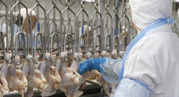 OMS fala sobre a China ter detectado coronavírus em frango brasileiro