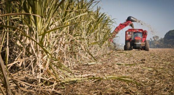 Mais duas usinas iniciam a moagem em Alagoas