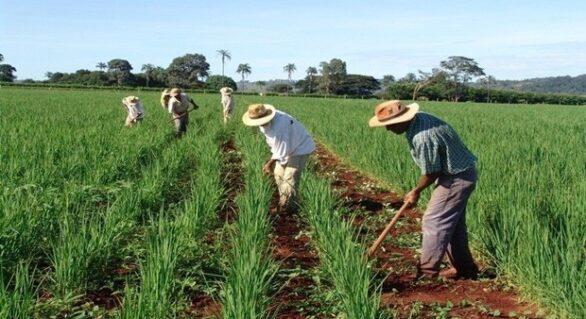 Produtos de agricultura familiar irão abastecer hospitais em Alagoas
