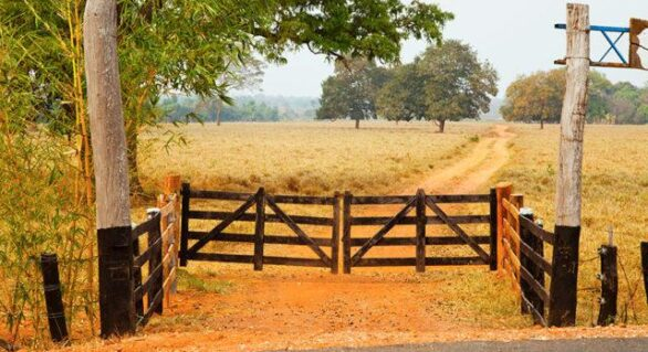 Banco do Brasil lança plataforma para venda de fazendas