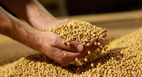 Safra mundial de soja vai crescer 7,6%