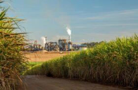 """Setor sucroenergético de AL pede """"cautela"""" em debate sobre a Reforma Tributária"""