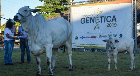 ACA cancela Expoalagoas Genética 2021