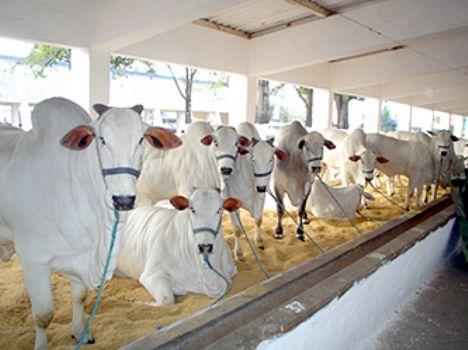 Leilões movimentam economia alagoana e a Expoagro 2012