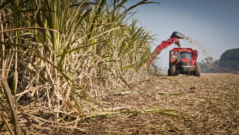 Safra da cana já acumula quase 572 mil toneladas de açúcar