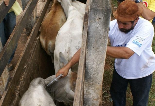 Nonô manda recado do curral: vacinem o gado contra a aftosa