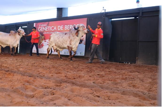 Animais do 4º Genética de Berço estão prontos para atender pecuária leiteira