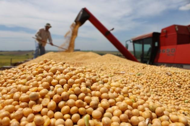 Segundo IBGE, safra de grãos deve fechar ano com alta de 4,2%