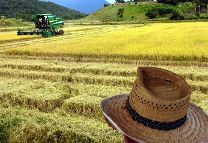 Governo deve disponibilizar R$ 2 bilhões para o Seguro Rural