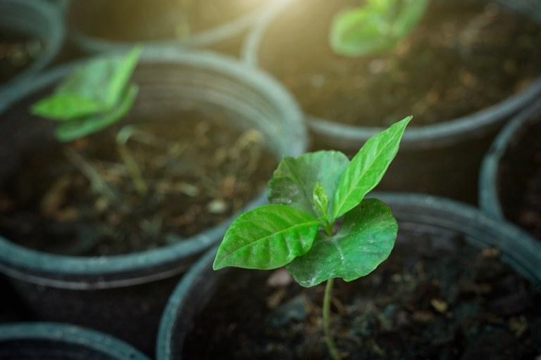Agricultura familiar terá mais R$ 1 bilhão para investimento