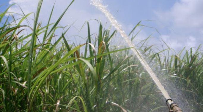 Pouca chuva preocupa fornecedores de cana de Alagoas