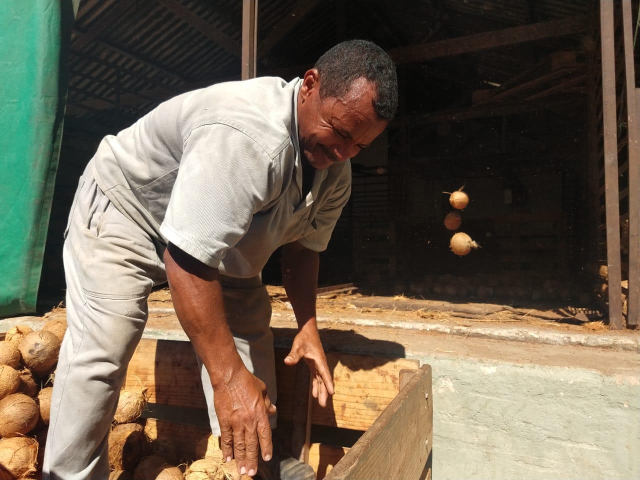 Pindorama investe em produção sustentável no beneficiamento do coco