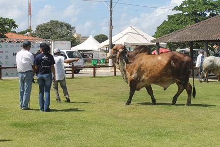 9ª Expoalagoas Genética se prepara para receber mais de mil animais no Parque da Pecuária