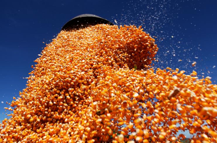 Mercado de milho deve ter preços firmes no 1º semestre do ano