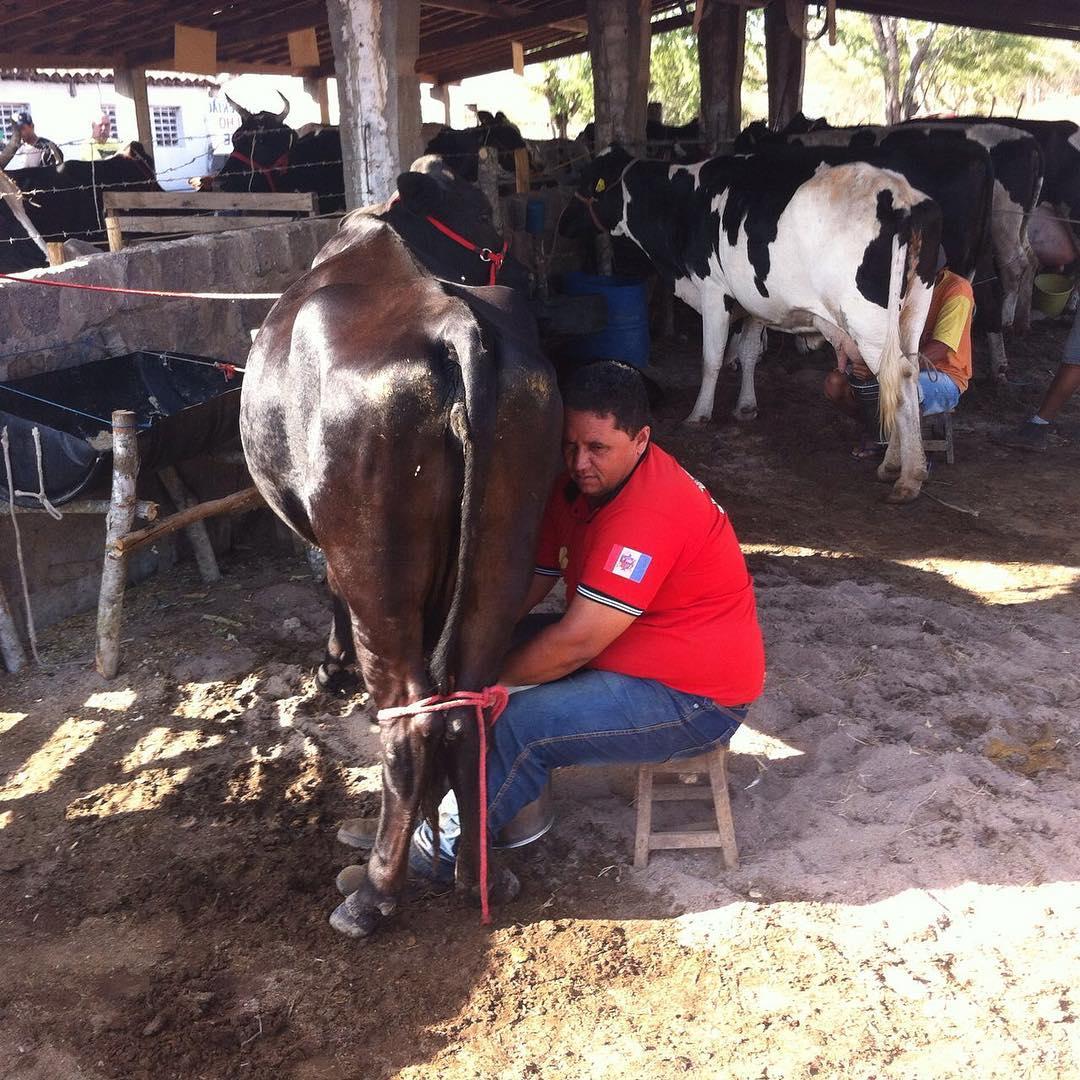 CPLA alerta que estiagem prejudica produção leiteira dos agricultores familiares