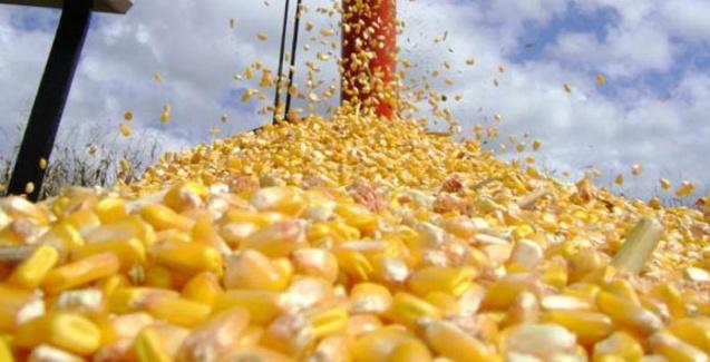 Mercado do milho continua aquecido nos portos brasileiros