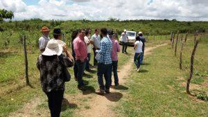 Dia de Campo discute ampliação do cultivo da palma forrageira em Batalha