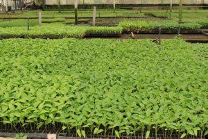 Produção de hortaliças movimenta mais de 50 milhões por ano
