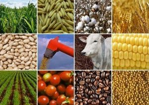Governo lança plano para promover imagem do agronegócio brasileiro