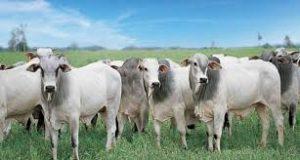 Preços da carne no atacado reagem e dão fôlego para novas altas nos preços da arroba