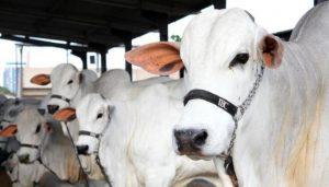 ACA espera recorde de público, negócios e participação de animais na Expoagro 2017