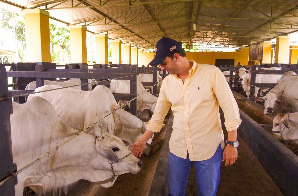 Nelore Positivo democratiza genética para cadeia produtiva da pecuária de corte